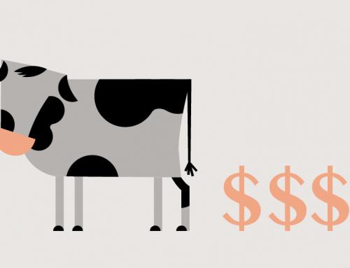 Udvikler du din virksomheds Cash Cows?